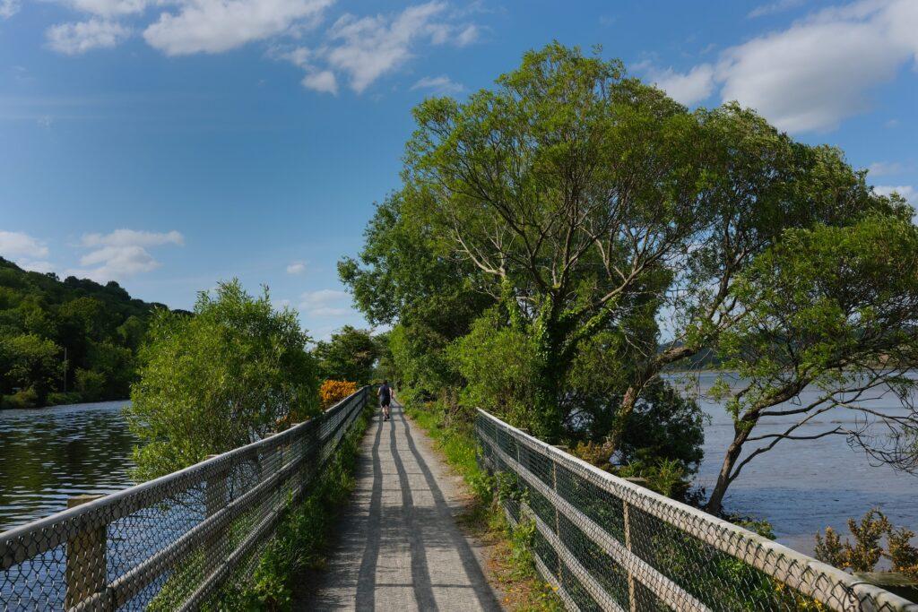 Carlingford Lough Greenway. Photograph: Columba O'Hare/ Newry.ie